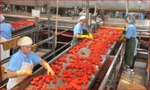 Corso di aggiornamento HACCP II livello: Addetti che manipolano alimenti